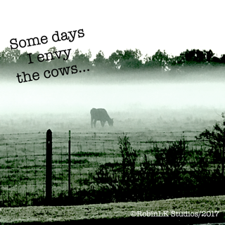 a cow in a field with a quote