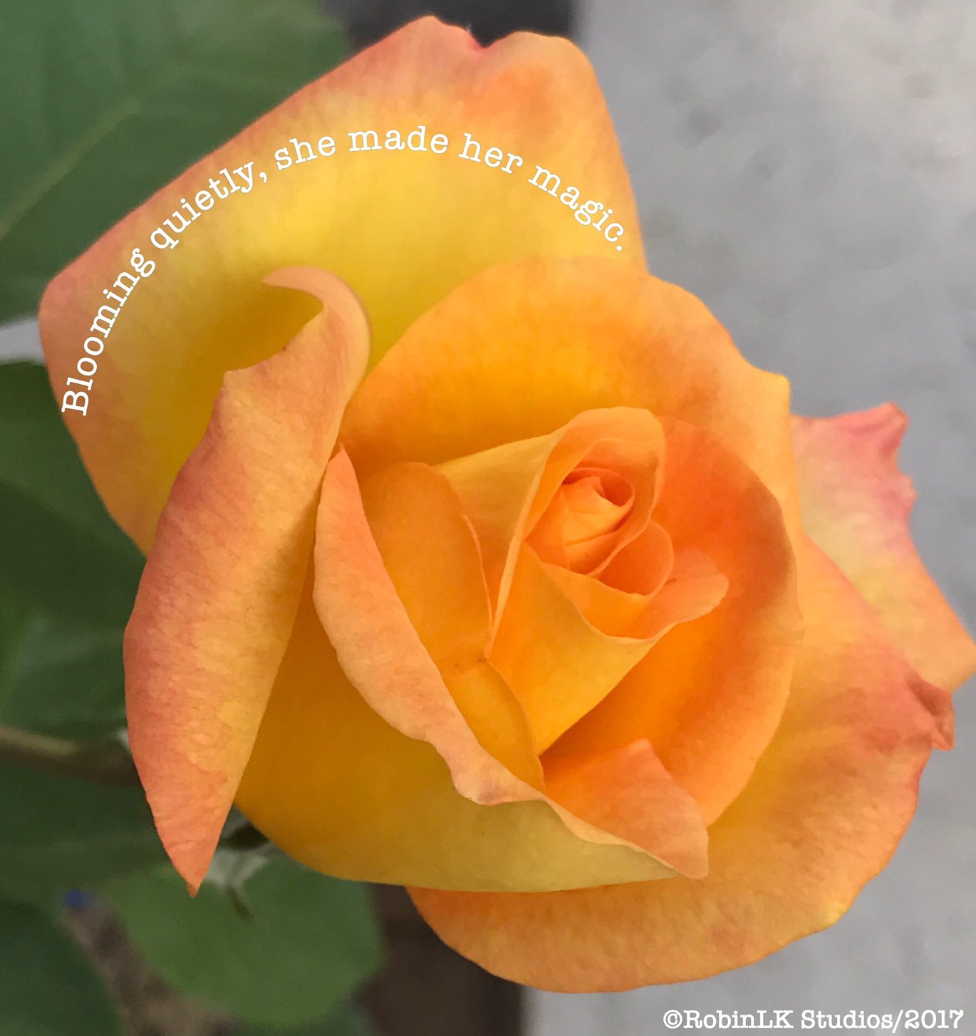 yellow rose with a six-word story from robinlk studios